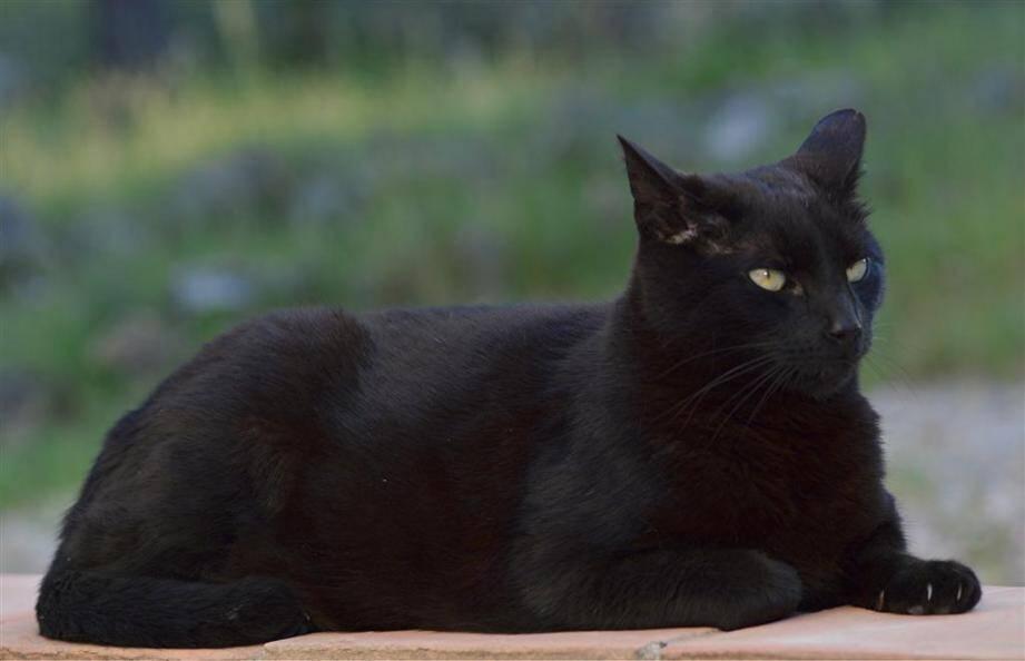 chats disparus à lorgues
