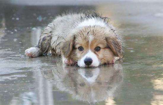 meteo chien