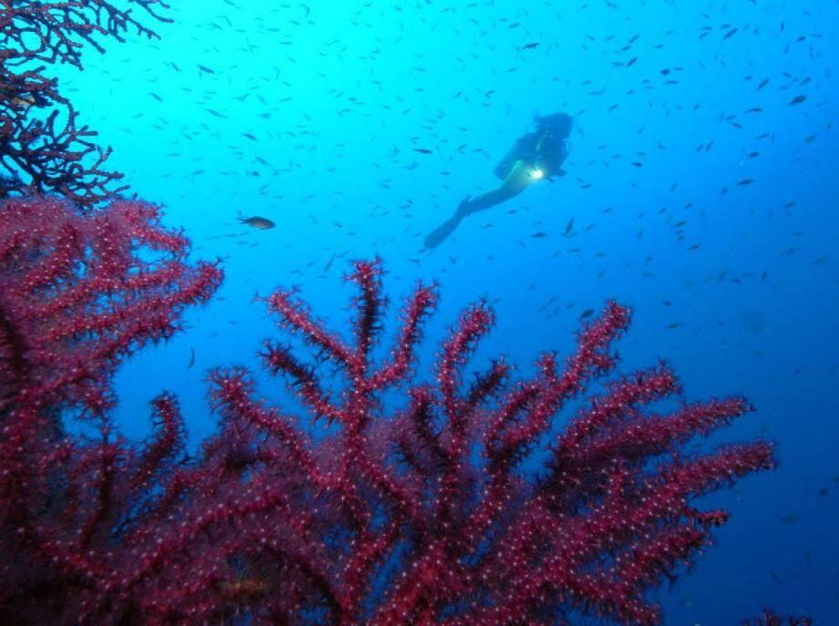 Nagez pour le concours de photos sous-marine - 30598218.jpg