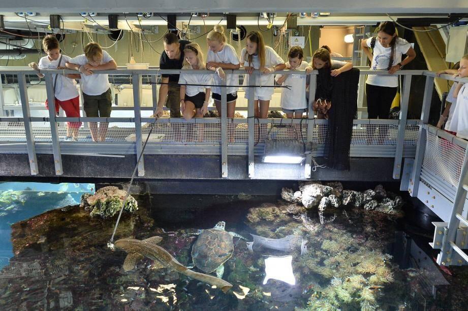 Au musée océanographique, des chanceux pourront nourrir les animaux.
