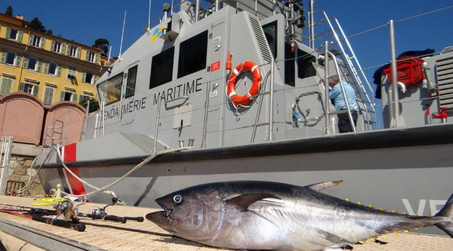 Illustration d'un thon rouge pêché illégalement