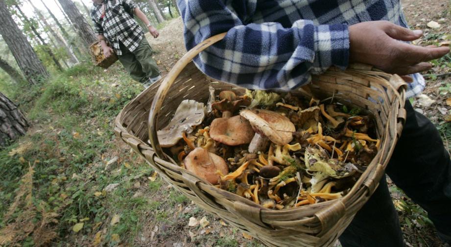 Illustration ramasseur de champignons.