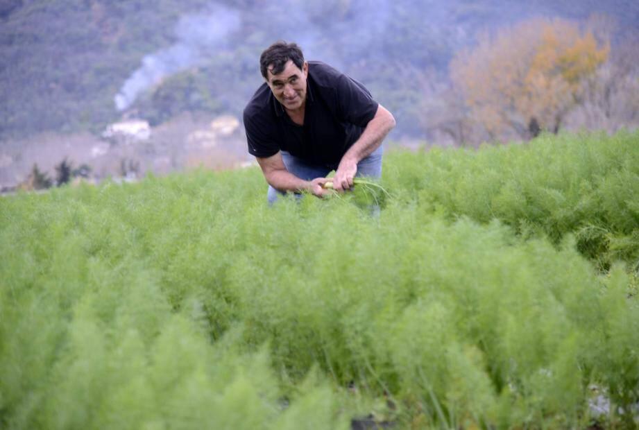 Malgré de vraies contraintes, le passage au bio a été « un salut économique », selon Jean-Charles Orso, agriculteur dans la vallée de la Siagne.