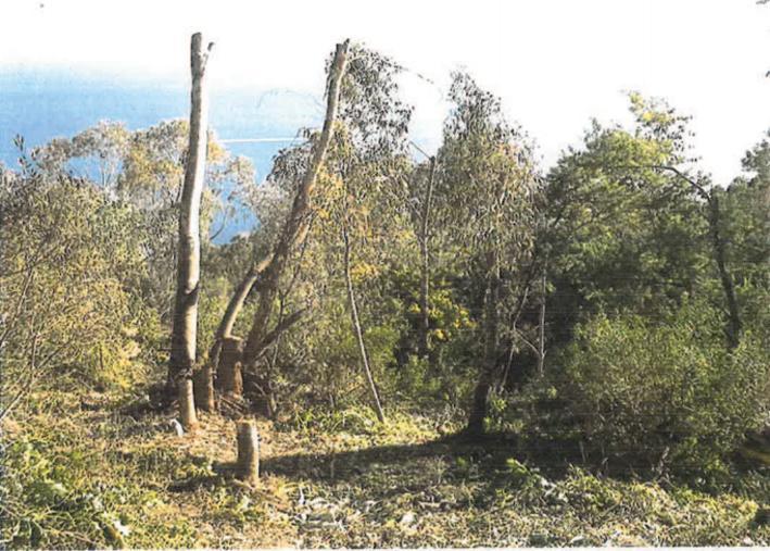 Le président du tribunal de Grasse a évoqué «un carnage», au sujet des arbres détruits dans la forêt du Paradou, protégée depuis 2008.