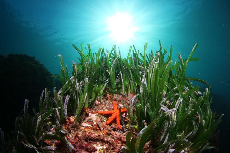 Exposition, rencontre, atelier, film permettront de découvrir le monde sous-marin. (PhotoAquanautes-Stéphane Jamme)
