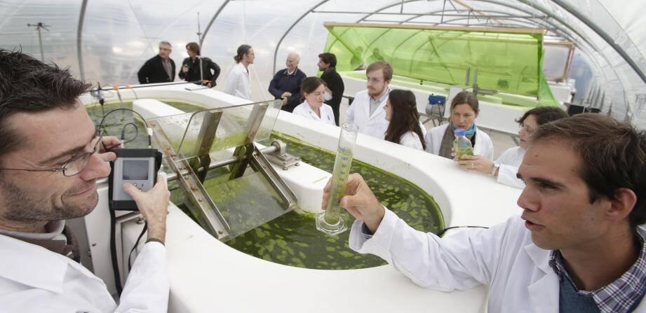 Une ferme à micro-algues unique en Europe a été implantée à l'observatoire océanologique de Villefranche. Elle sera équipée de panneaux photovoltaïques d'ici l'été.