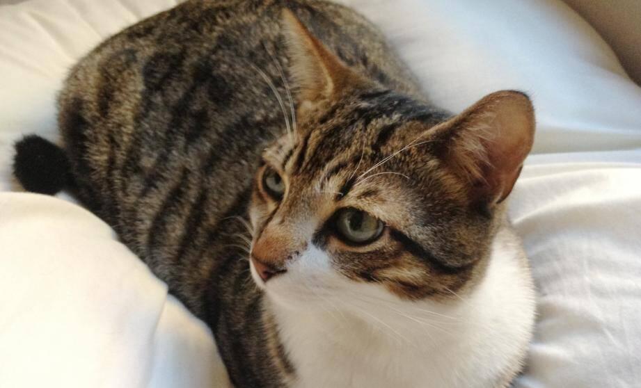 Les photos du chat victime de ces sévices circulent sur les réseaux sociaux. Mais elles sont si choquantes que nous avons choisi une photo d'illustration montrant un chat en parfaite santé.
