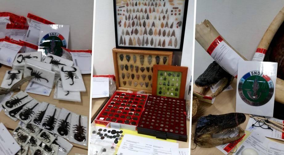 Quelques uns des objets et animaux naturalisés retrouvés au domicile d'un e-commerçant azuréen.