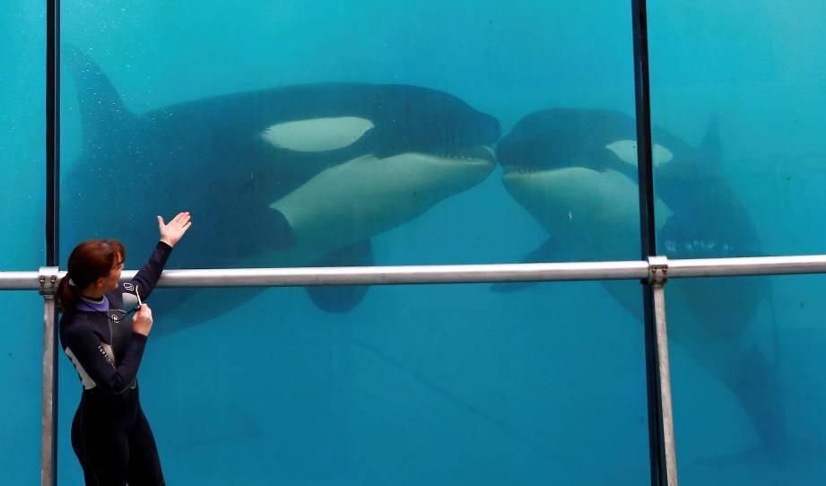 Suite aux polémiques sur les maltraitances des orques à Marineland plusieurs associations réagissent.