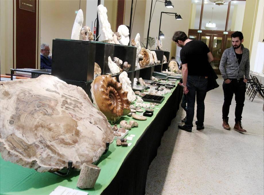 Des fossiles et des pierres millénaires.
