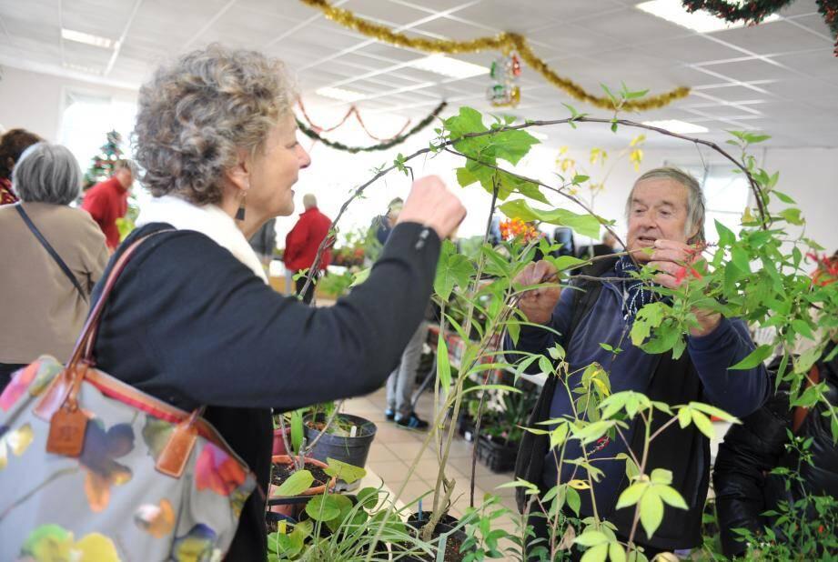 La fête des plantes aura lieu du 1er au 3 avril à Fréjus.