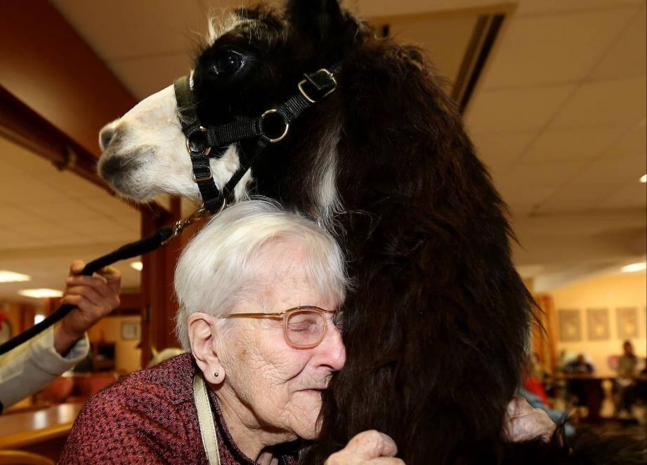 La présence d'animaux comme le lama stimule les sens chez les personnes âgées. Câlins tout doux en prime.