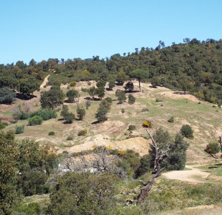 Une bande linéaire d'une soixantaine d'hectares, sur 100 mètres de large, a été débroussaillée afin de protéger les habitations.
