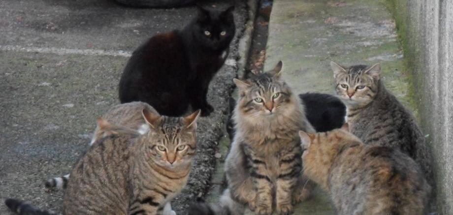 Des chats errants (image d'illustration)