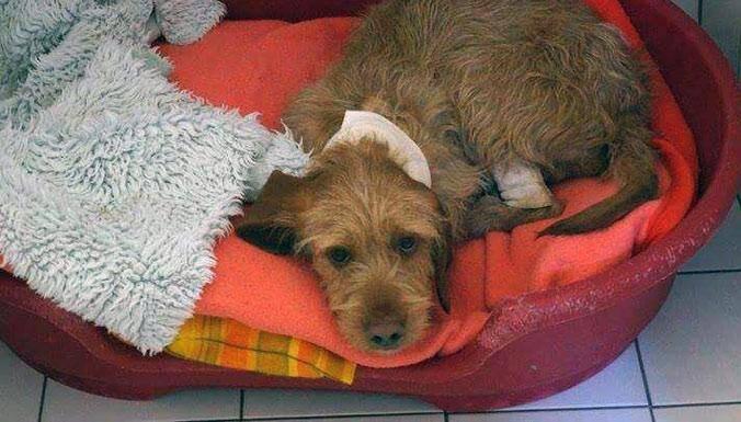 Le chien était à l'agonie dans une multitude de sacs plastiques. Grâce à la réactivité des deux garçons, Elliott est sauvé.