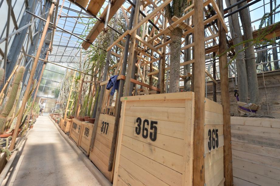 Les 500 grandes plantes d'envergure sont déterrées et placées dans des caisses en pin non traité pour procéder à leur déplacement, cet automne.