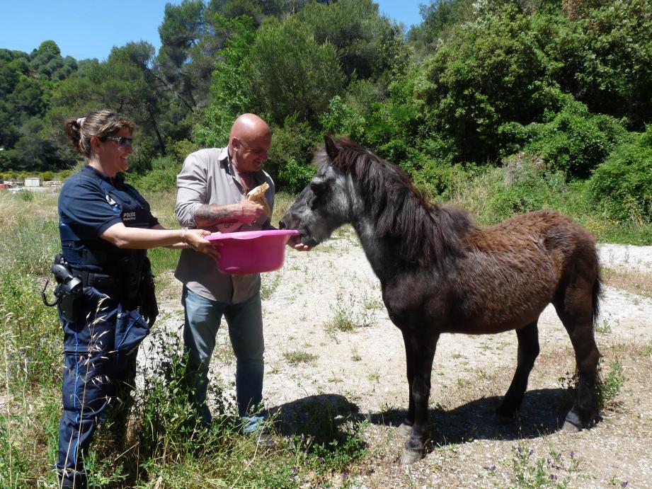 Un poney retrouvé abandonné a été sauvé, hier. « Toute personne ayant un bout de terrain pour accueillir l'animal » peut contacter la SDA.