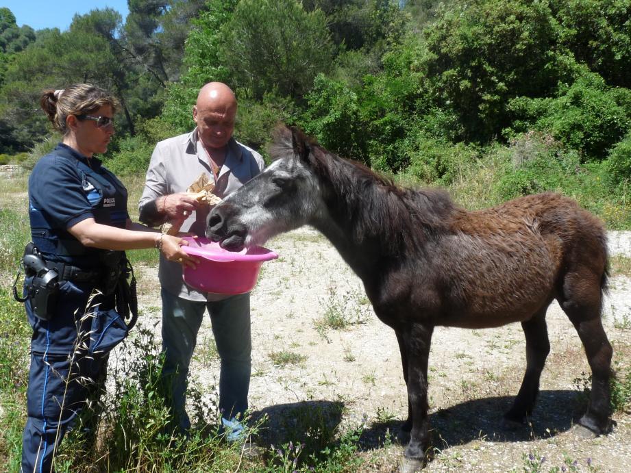 """Un poney retrouvé abandonné a été sauvé, lundi. """"Toute personne ayant un bout de terrain pour accueillir l'animal"""" peut contacter la SDA."""