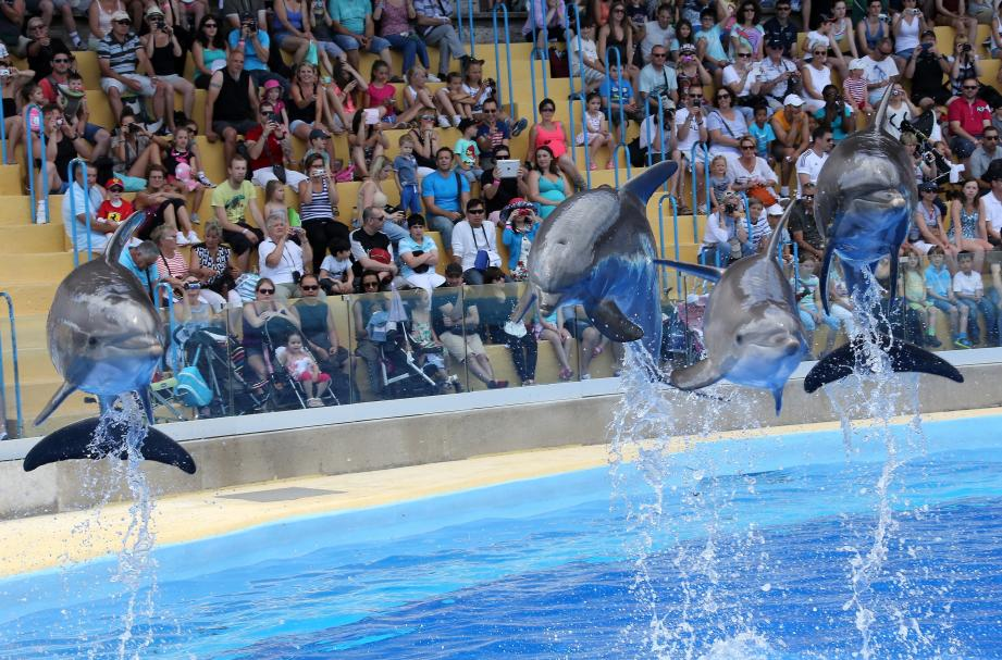 Les dauphins au parc aquatique, c'est plutôt sympa. Mais, si tu veux les rencontrer dans leur milieu naturel ? Dis-toi que c'est possible.