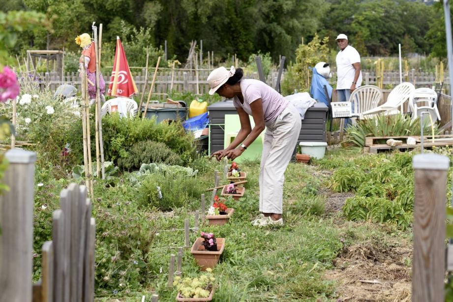 Chacun cultive ce qu'il veut dans son jardin familial. Mais sans pesticide ni engrais !( photo Gilles Traverso )