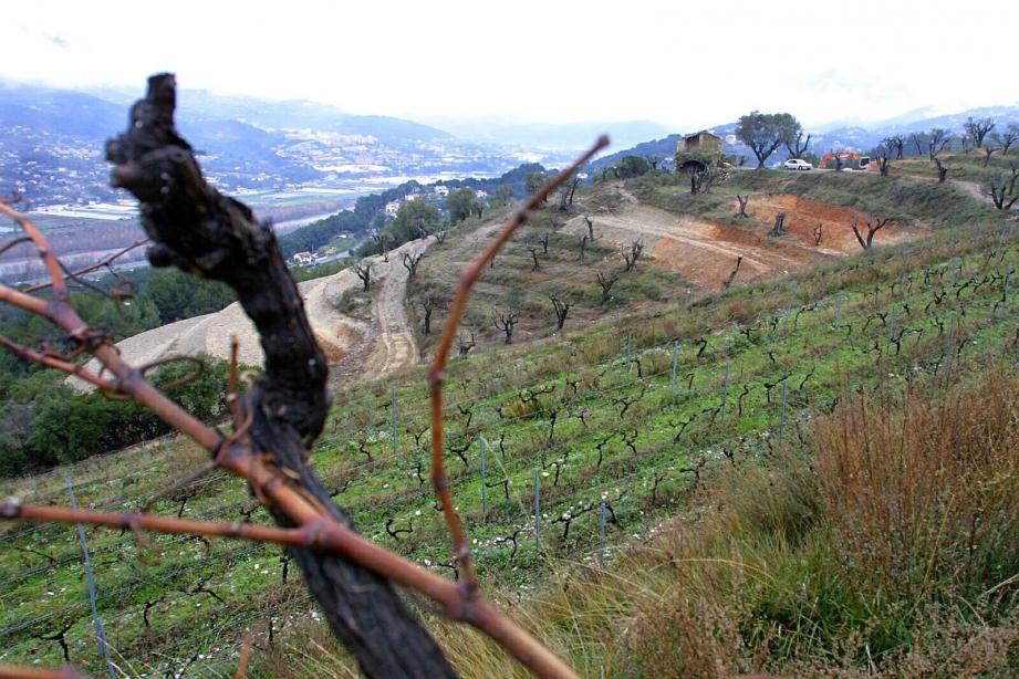 Ce week-end, les dix viticulteurs qui produisent le vin de Bellet, vous attendent, de 10 h à 18 h, pour leur traditionnelle journée portes ouvertes.