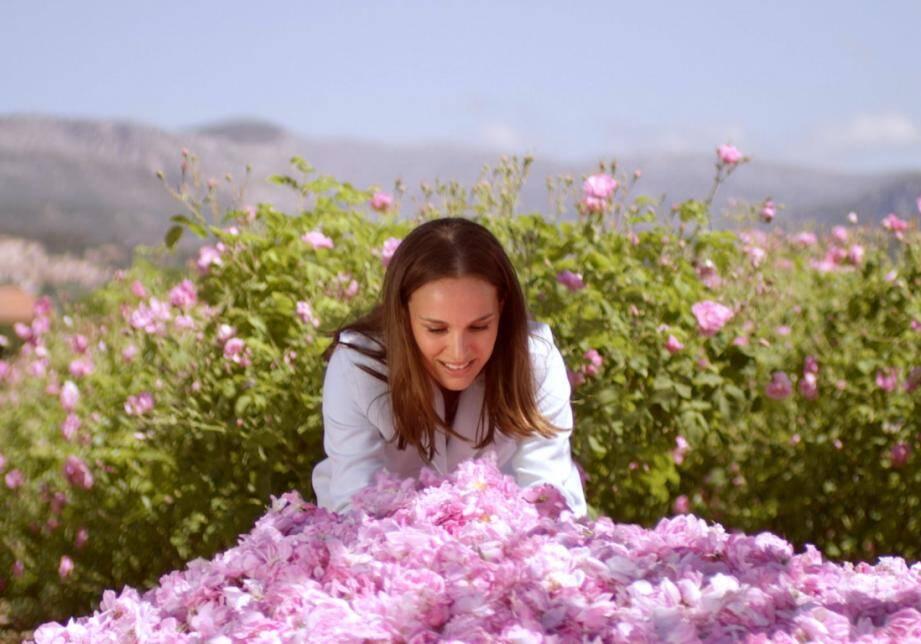 Natalie Portman, séduite par la rose de mai de Grasse.