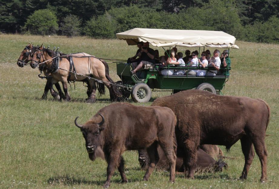 Le safari photo se déroule en calèche ou à pied.