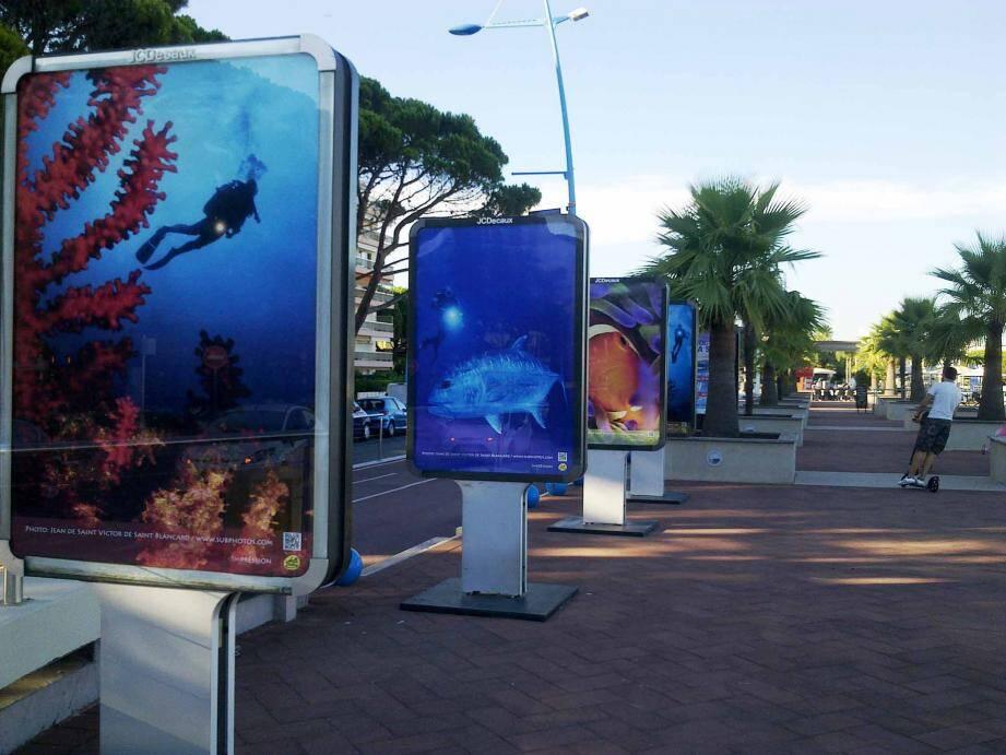Un grand concours de photographies sous-marines est organisé par la communauté d'agglomération des Pays de Lérins pour mettre en lumière la beauté et la fragilité de la faune et de la flore locale.
