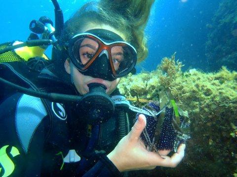 Au fond de la mer, on trouve des étoiles de mer et des oursins parmi les rochers tapissés d'algues.