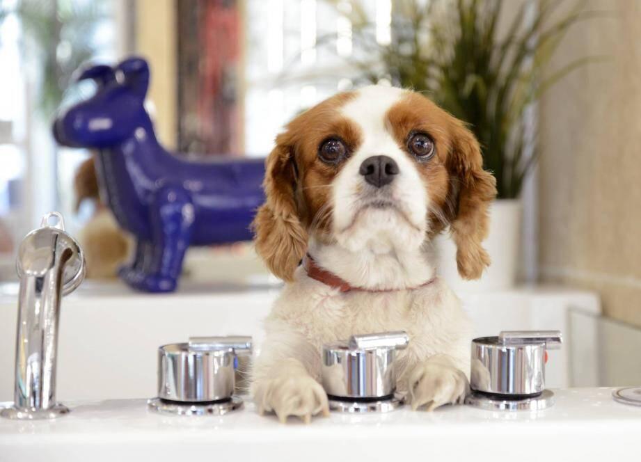 L'enseigne propose aussi des produits bio et des accessoires pour chiens.