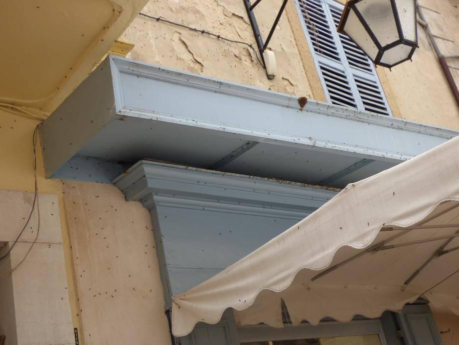 Depuis quelques jours, plusieurs villes des Alpes-Maritimes sont envahies par de petits papillons grisâtres, comme ici à Vence.
