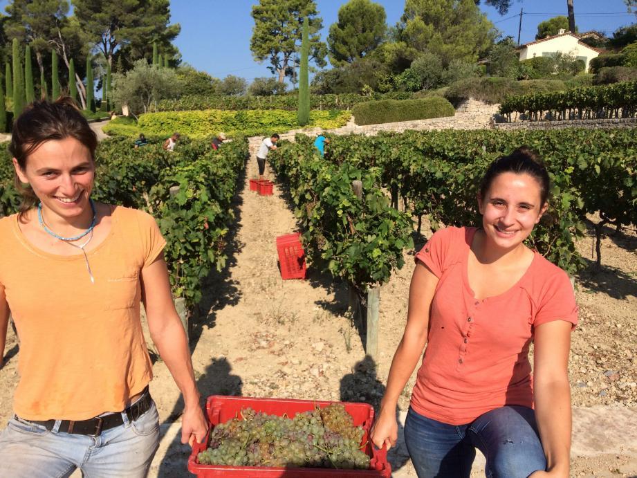 Jeudi dernier, Laure Du Cos, 35 ans, et Margaux Armand, 22 ans, jeunes œnologues auprès du vigneron Bruno Tringali, étaient sur le pont pour les vendanges.
