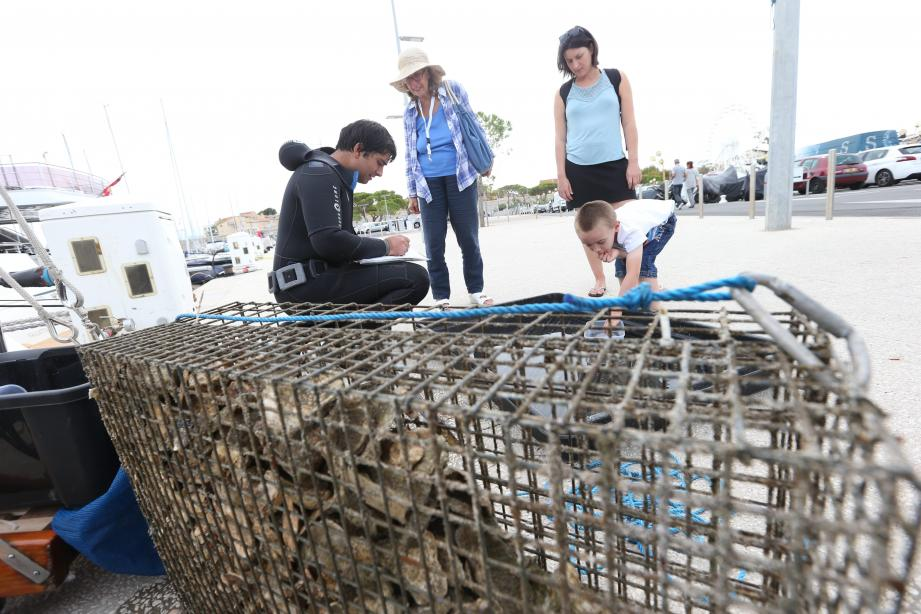 Des nurseries de poissons ont été créées sur les quais du port Vauban. Les enfants ont pu en découvrir les premiers effets.