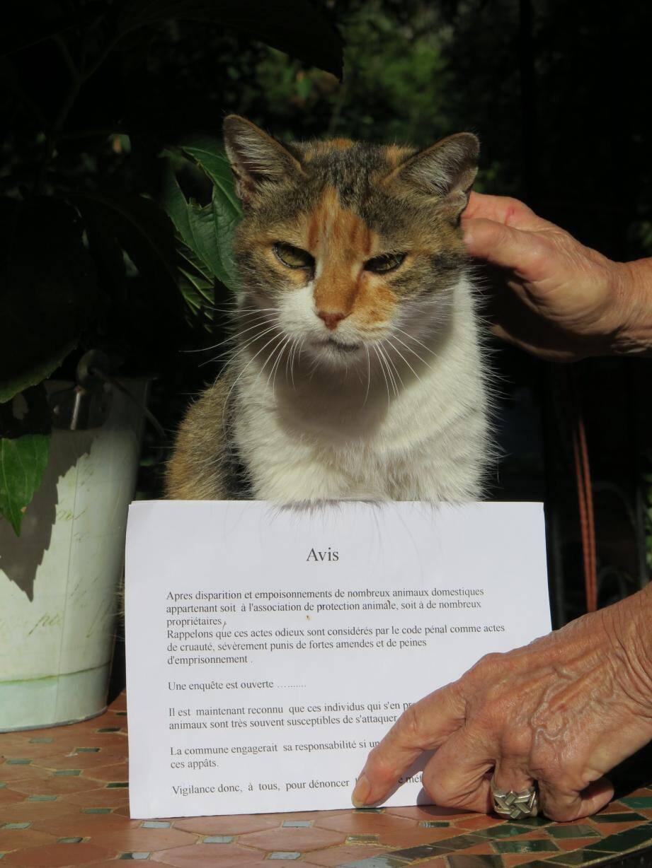 Un avis a été placardé dans tout Breil pour prévenir les empoisonnements de chats.