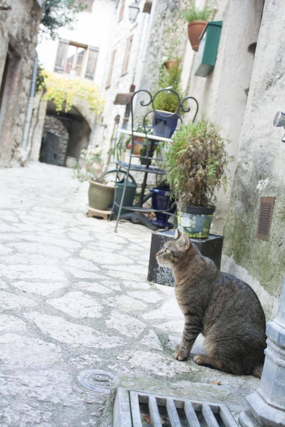 Au village comme partout dans la commune, les chats sans maître seront stérilisés.