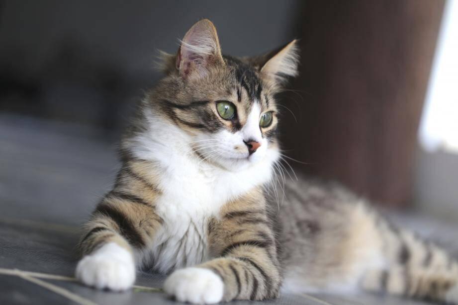 Image d'illustration d'un chat.