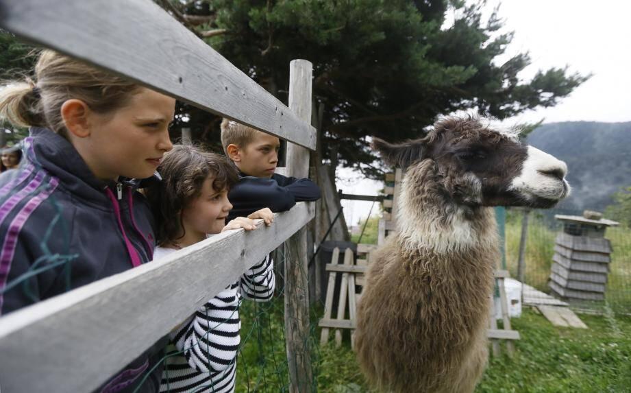 Depuis 14 ans, Christian Gay organise des randonnées avec ses lamas au col de Turini. Après la destruction de son chalet, il lui faut reconstruire un nouvel abri.