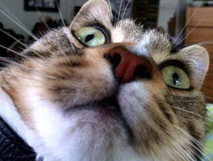 Un chat pris par surprise par l'application.