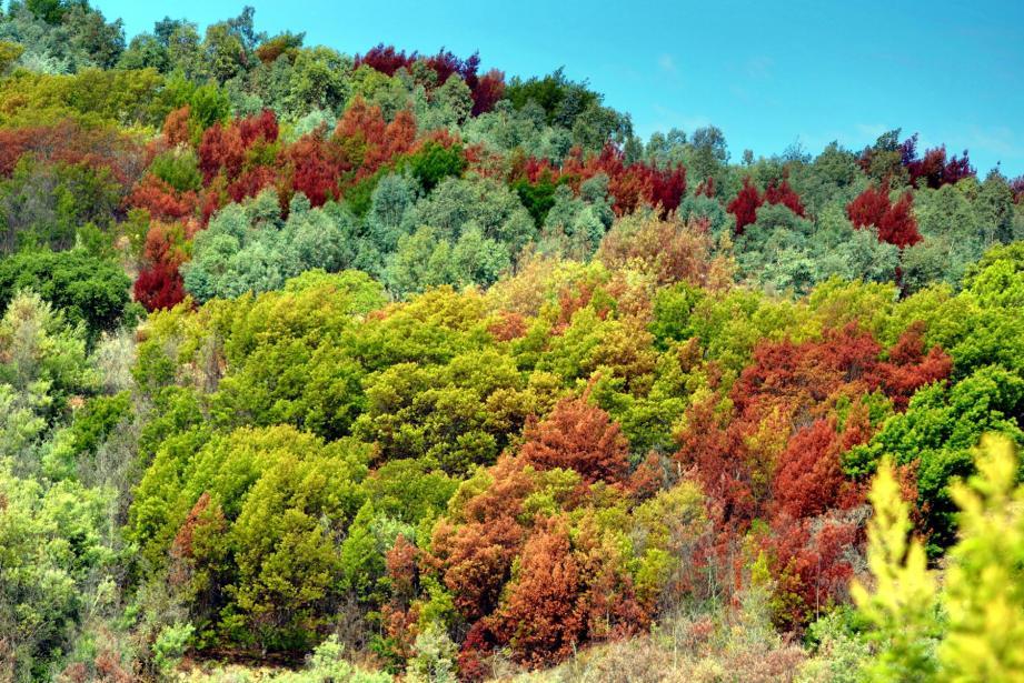 Pegomas sur la colline qui domine la vallée de la Siagne.