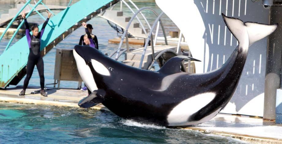Un spectacle d'orques à Marineland.