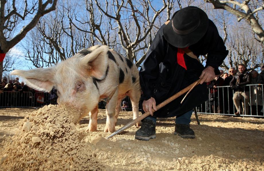 Des démonstrations de cavages (art de trouver une truffe) auront lieu durant cette journée particulière.