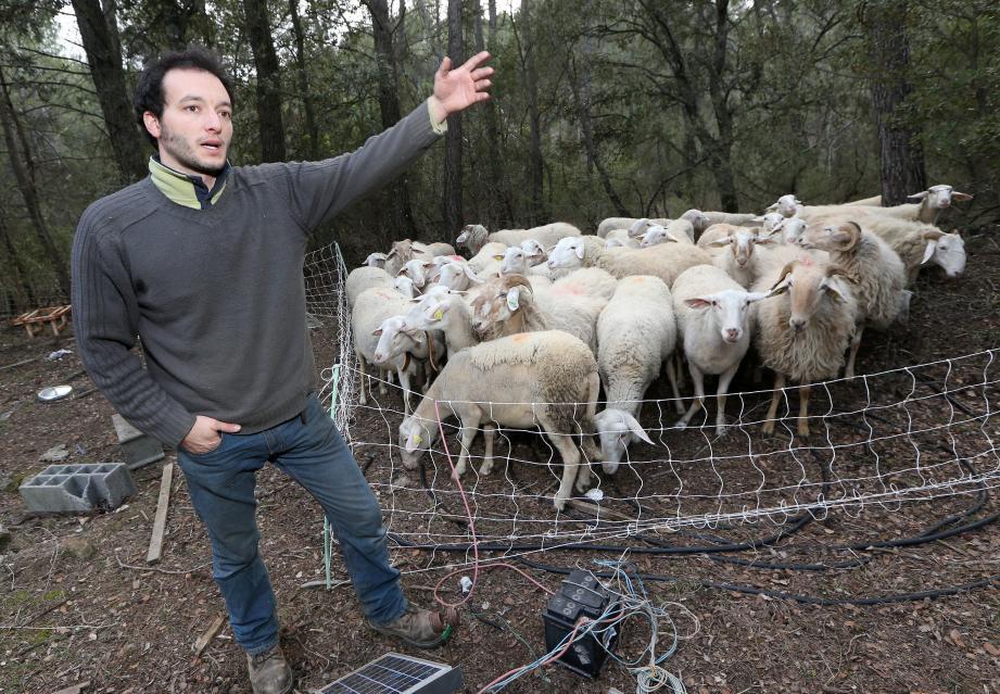 Dans le Var, l'élevage est extensif et les troupeaux pâturent, en débroussaillant les forêts. Cela demande des investissements contre la prédation, rappelle Sylvain Apostolo.
