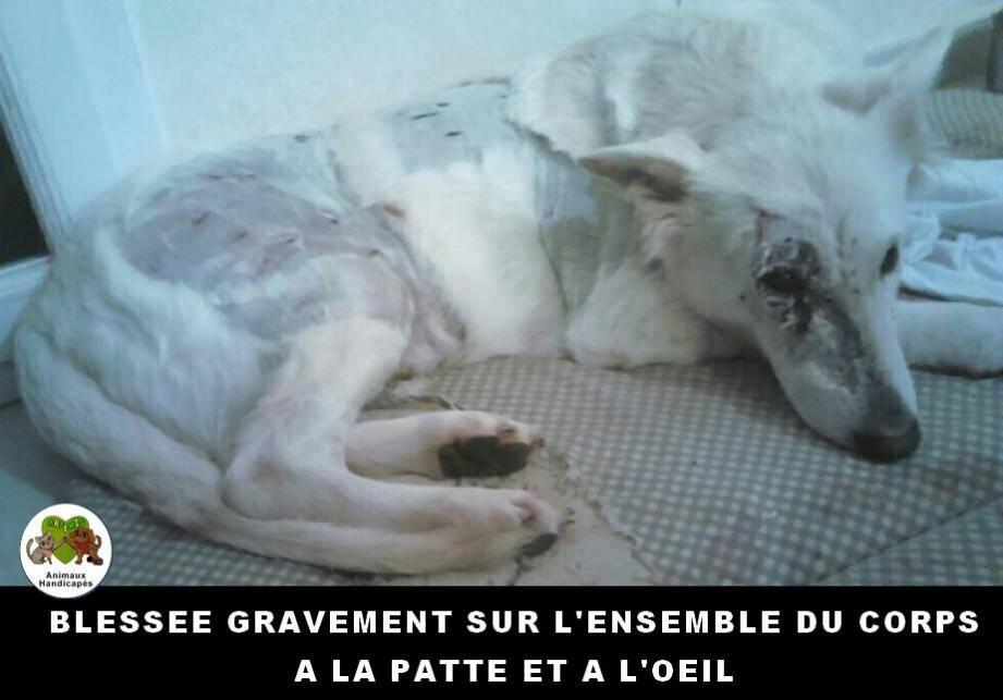 Les frais vétérinaires s'annoncent lourds.