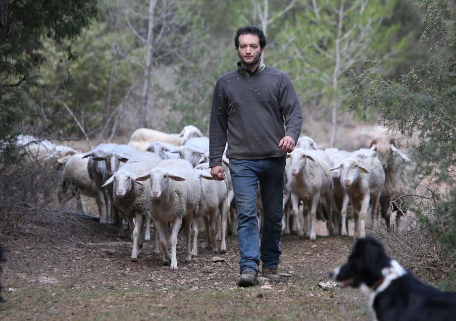 Sylvain Apostolo éleveur à Sillans-la-Cascade
