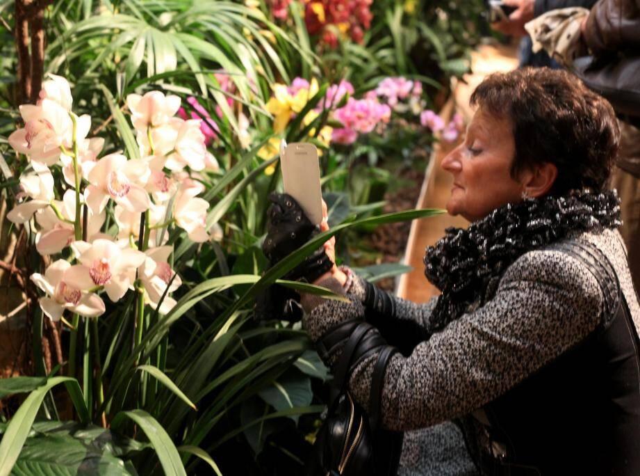 En parallèle de la 84e Fête du citron, le Palais de l'Europe déroulera le tapis rouge au Festival international des orchidées  et au salon de l'artisanat dès samedi et jusqu'au 1er mars.