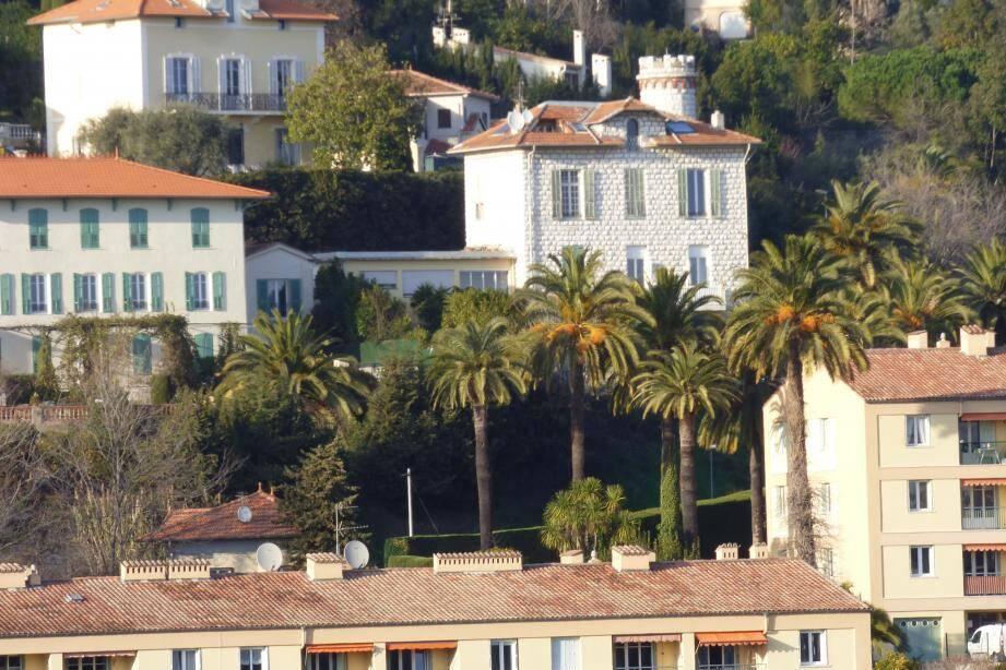 Les palmiers se comptent par centaines à Vence, mais plusieurs dizaines d'entre eux sont déjà morts.