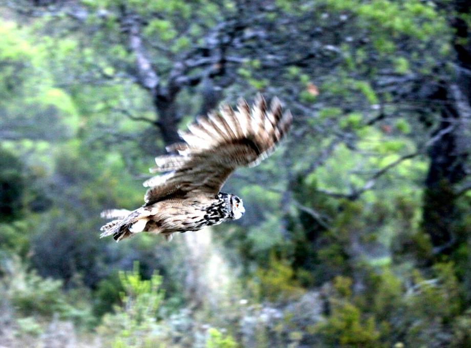 Vendredi à Pourcieux, les oiseaux de notre région seront mis à l'honneur par la LPO, à la salle des fêtes.