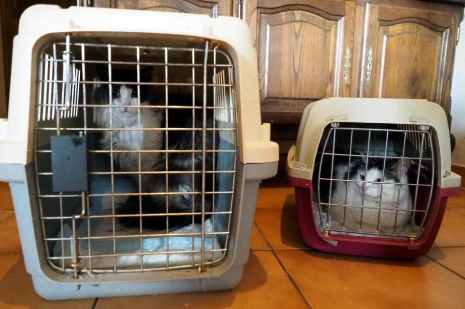 Peluche, Perle et Sushi sont atteints du Coryza. Les trois chats, sous traitement, sont très affaiblis. Leurs états nécessitent une attention particulière de Laura et Sylvie.