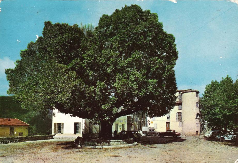 Castellar, l'ormeau du village.