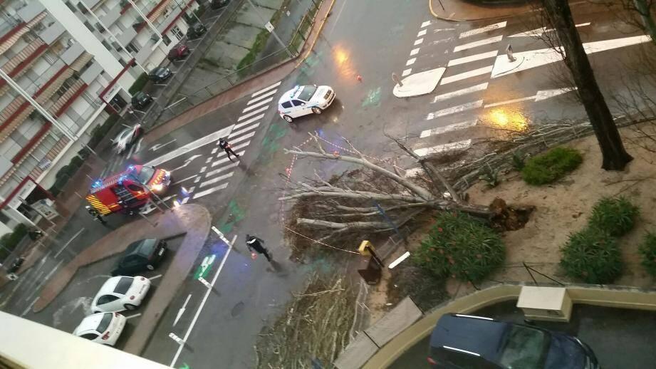 L'arbre semble avoir été coupé au collet par la force du vent à l'angle de la rue Soutine et de l'allée des Platanes.(DR)
